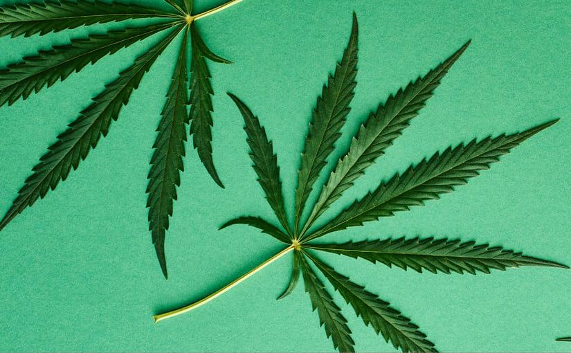 La marijuana crée-t-elle une dépendance ?